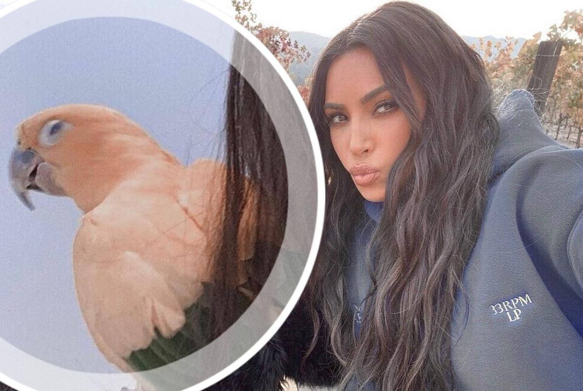 Ким Кардашьян обвинили в пропаганде браконьерства из-за фото с попугаем