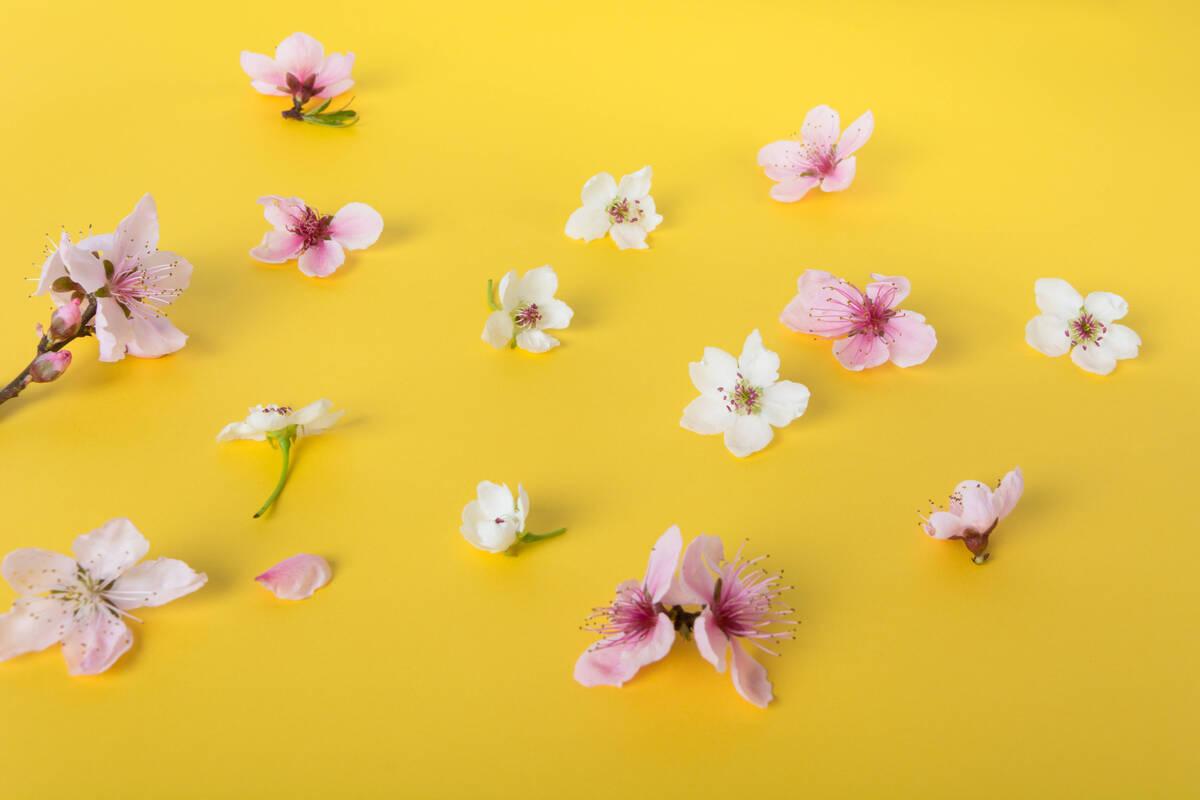 Тест на эрудицию: много ли у вас знаний о цветах?