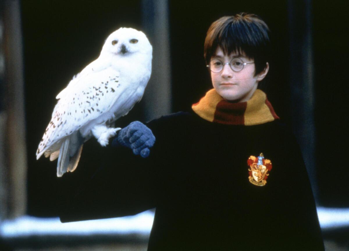 Тест: сможете ли вы правильно назвать 13 волшебных существ из мира «Гарри Поттера»?