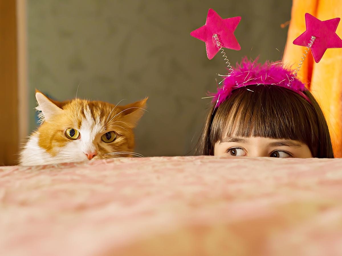 Сколько живут кошки и как мы можем на это повлиять