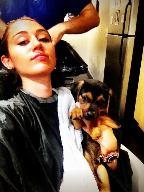 Майли Сайрус приютила щенка