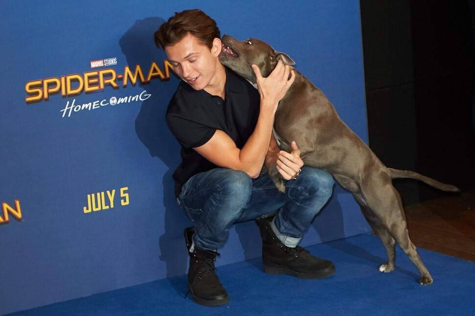 Том Холланд привел собаку на красную дорожку премьеры «Человека-паука» в Лондоне