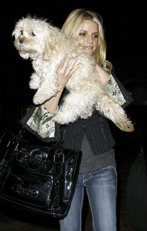 Джессика Симпсон смирилась со смертью собачки