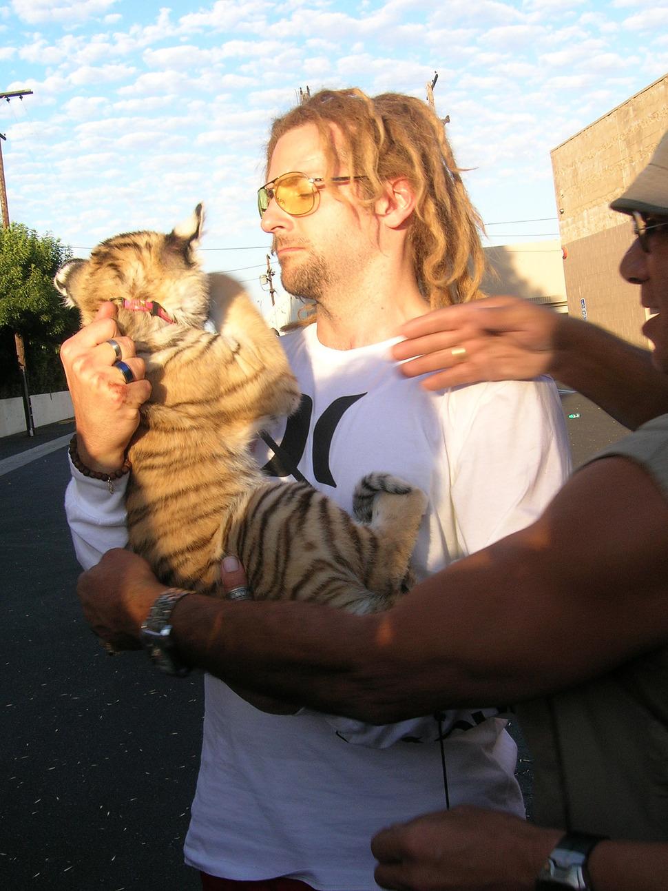 Брэдли Купер укротил тигренка