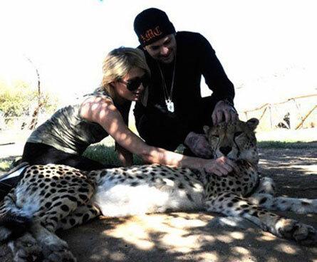 Пэрис Хилтон хочет купить гепарда