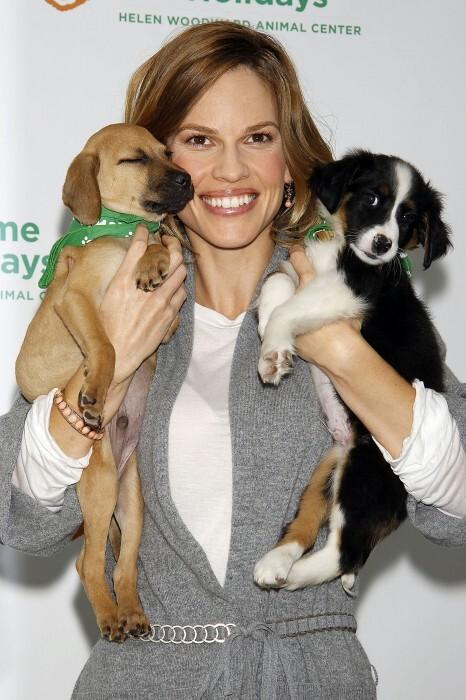 Хилари Суонк помогает бездомным животным