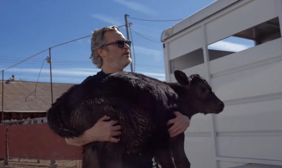 Видео: Хоакин Феникс спас корову с теленком со скотобойни в Лос-Анджелесе