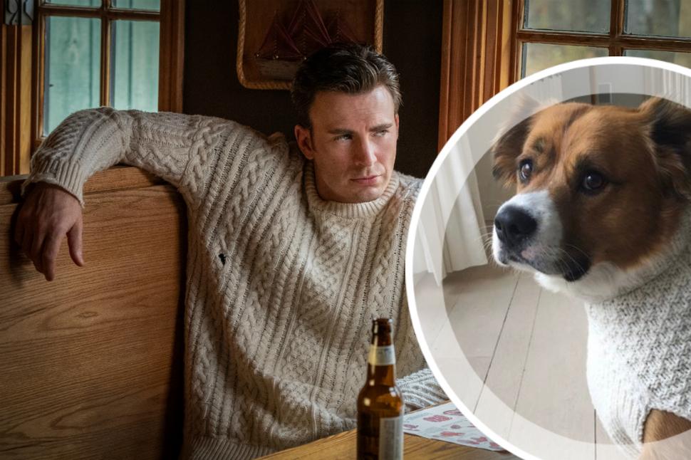 Милее не придумаешь: Крис Эванс нарядил своего пса в свитер из фильма «Достать ножи»