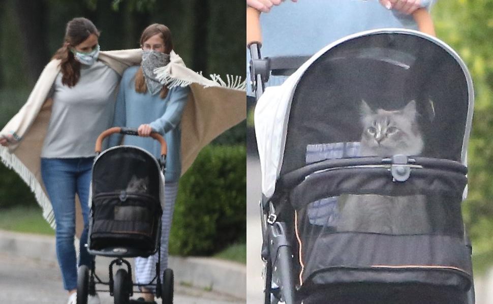 Невероятно мило: Дженнифер Гарнер выгуливает своего кота в коляске