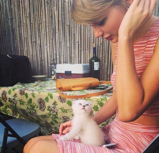 Тейлор Свифт приютила еще одну кошку