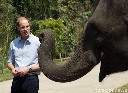 Принц Уильям познакомился со слоном в Китае