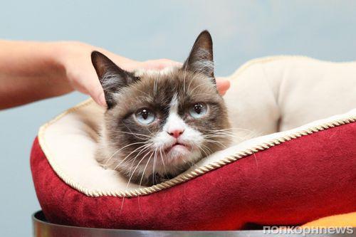 В Музее мадам Тюссо появится свой Grumpy Cat