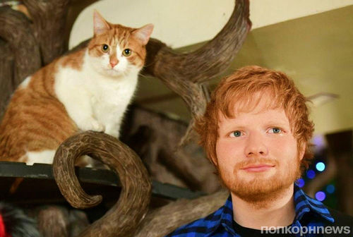 Эд Ширан завел отдельный Instagram-аккаунт для своих кошек