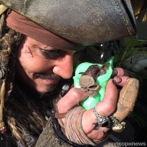 Видео: Джонни Депп накормил новорожденную летучую мышь