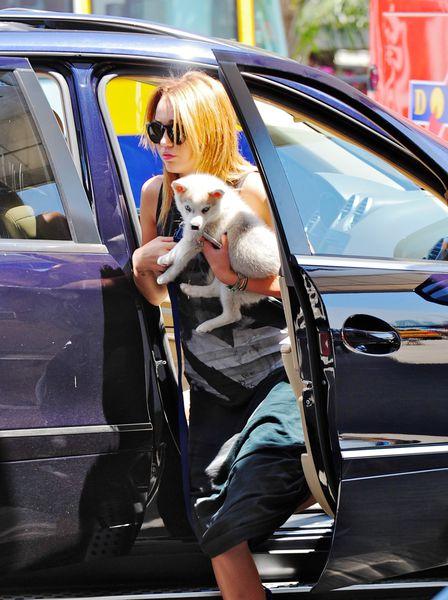 Еще одна новая собака Майли Сайрус