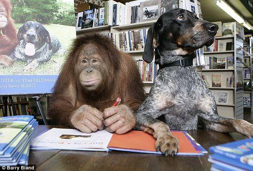 Самые лучшие друзья: орангутанг Сирия и собака Роско