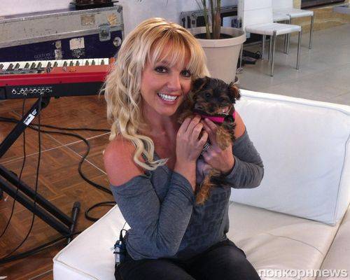 Бритни Спирс завела щенка
