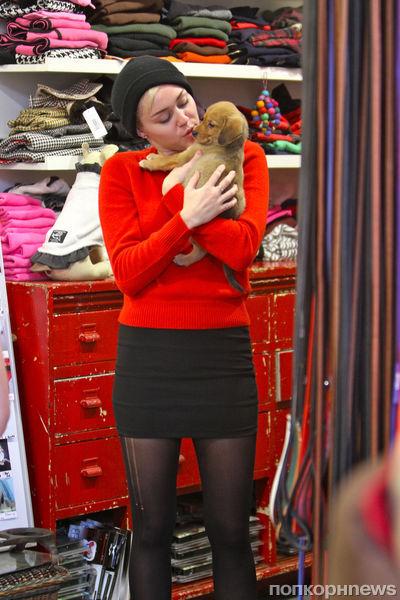 Майли Сайрус приютила еще одного щенка