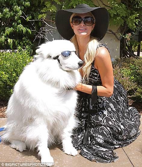 Пэрис Хилтон даже собаку сделает модной