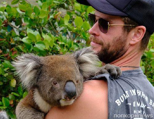 Это не новость, это просто Крис Хемсворт обнимается с коалой