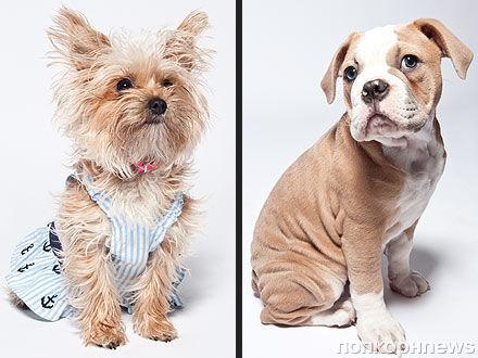 Собаку Майли Сайрус Лилу убила другая ее собака