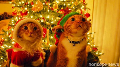 Опубликован рейтинг самых популярных рождественских песен