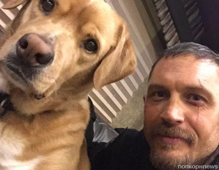 Том Харди спас бездомных щенков