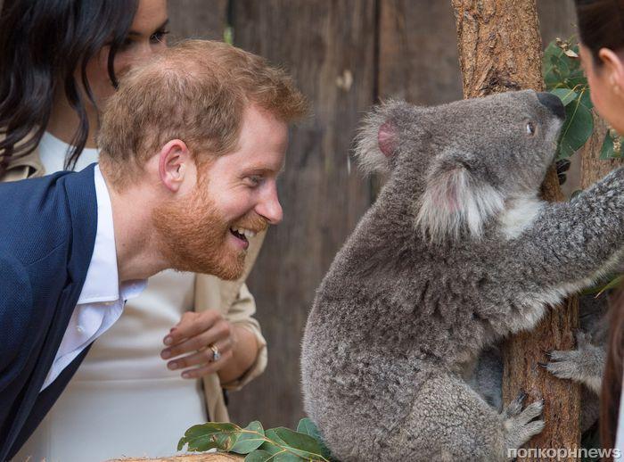 Принц Гарри обошел по популярности Кейт Миддлтон, королеву Елизавету II и всех остальных членов королевской семьи