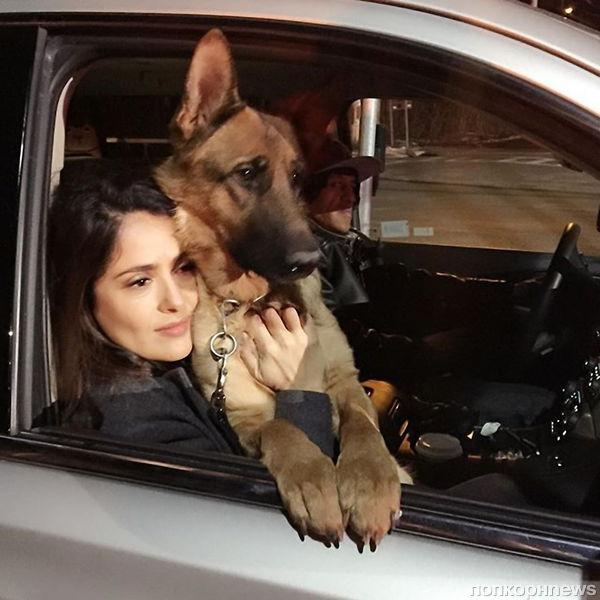 Сальма Хайек лишилась собаки